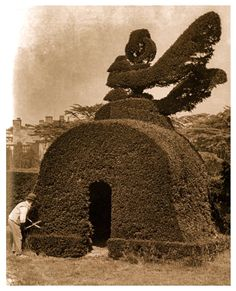 Clipping the topiary at Elvaston Castle, Derbyshire 1900's. My Dad also did this in the 60's as a holiday job