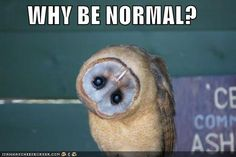 EXACTLY!!!   Why be NoRmAl ?!?