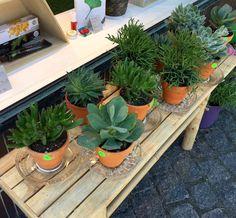 Der er altid et stort udvalg af grønne planter i Vølve butikken. Grøn gør glad.