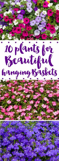 10 flowers for beautiful hanging baskets! A great list of plants for sun or shade-loving outdoor areas. Perfect for porches or outdoor living spaces!