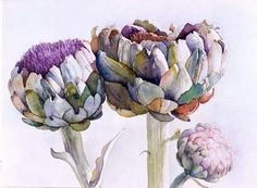 Beautiful watercolor of artichoke flower buds opening. Art Aquarelle, Art Watercolor, Watercolor Flowers, Watercolor Fashion, Arte Floral, Botanical Drawings, Botanical Prints, Art And Illustration, Illustrations Posters