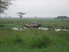 Day 24- Serengeti Game Drives Nairobi, Africa, Mountains, Game, Nature, Travel, Naturaleza, Viajes, Gaming
