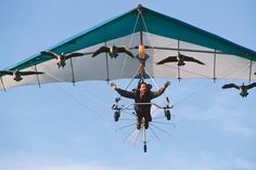"""Christian Moullec flying a microlight with his geese -  Earthflight, A Nature Special Presentation, """"Flying High,"""" shows how the series was made, including the relationships that formed between people and birds. Airing October 9 on PBS Hawaii."""