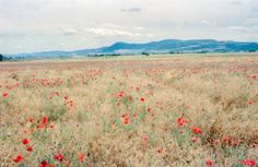"""""""Photo by Michael George // Outside of Pamplona, a field of poppies grows alongside the Camino de Santiago. Walking the Camino is often like…"""" Hippo Campus, National Geographic Travel, Tumblr, Poppies, The Outsiders, Scenery, Taehyung, Instagram, Pamplona Spain"""