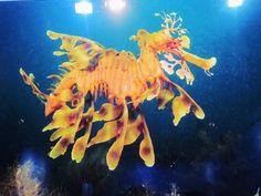 peixe dragão