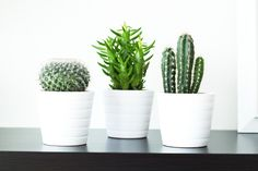 ikea white potted cacti - Google Search