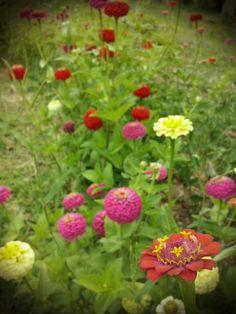 Dicen que hay flores en el jardín... :)
