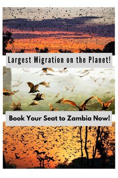 Deep in the heart of Zambia you will find the Kasanka National Park, home to the incredible annual bat migration of millions of straw-coloured fruit bats. Travel Articles, Travel Tips, Victoria Falls, African Countries, Wildlife Conservation, Group Travel, Group Tours, Large Animals, African Animals