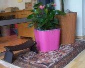 Fabricant Français de pot de fleurs Rose Fushia contemporain : Accessoires de maison par inisia-fr sur ALittleMarket