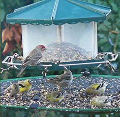 how to make a bird seed catcher