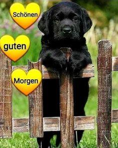 Good Morning, Labrador Retriever, Dogs, Tiffany, Hapy Day, Bonjour, Good Morning Greeting Cards, Good Morning Sunshine, Good Morning Wednesday