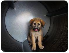 » Dog Photographer Adrian Hitt Commercial Pet Photographer Stock