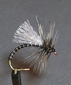 20  GO TO  PATTERN Red Zebra Midge Nymph Fly with white wing  sz
