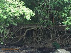 Roots n all Currumbin Rock Pools photo©jadoretotravel
