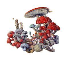 Mushroom watercolor by Martha Iserman aka Big Red Sharks Studio Watercolor Images, Watercolor Paintings, Sharks, Natural History, Big, Mushroom, Illustration, Artist, Artwork