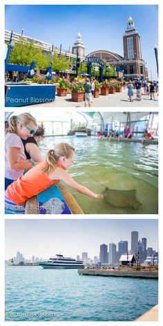 Chicago is a great place to take a family vacation. Even though it can be an expensive destination, love the tips in this article on how to save money on the attractions and still see the Windy City. Kids will love seeing Navy Pier, the Shedd Aquarium, and love the list of free spots for kids in Chicago!