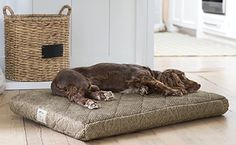 Dream Lounger Memory Foam Dog Bed Show your dog how much you care with our memory foam Dream Lounger. orvis.co.uk