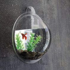 Wall Mount Hanging Beta Fish Bubble Aquarium Bowl Tank KAZE Home Décor (good place for a pet fish.probably better in a reading room than a play room). Live Aquarium Plants, Pond Plants, Planted Aquarium, Aquarium Fish, Bubble Tanks, Bubble Fish, Bubble Wall, Beta Fish, Thing 1