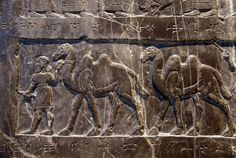 The Black Obelisk of Shalmaneser III - attendants bring two-humped camels, tribute from Musri, a country far to the east.