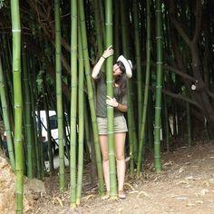 #bambu #cabarceno #verano2013