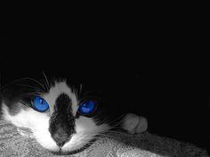 Gatitos muy tiernos. HD. (recomendado)