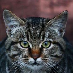 #cat #cats #animals