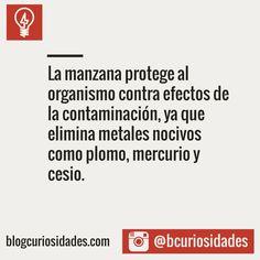 Blog Curiosidades : Foto