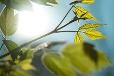 USC researchers study the genetic switch regulating a plant's internal clock. Time Of Our Lives, About Climate Change, Molecular Biology, Natural Sleep, Environmental Science, Ayurveda, Our Life, Usc News, Science And Technology