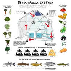 Aquaponics is a marriage of aquaculture (farming aquatic animals, like fish or prawns) and hydroponics (growing plants in water) Aquaponics System, Aquaponics Greenhouse, Hydroponic Gardening, Aquaponics Plants, Aeroponic System, Urban Agriculture, Urban Farming, Urban Gardening, Indoor Gardening