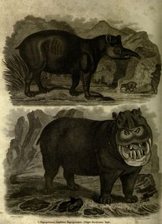 Tapir and Hippo. A history of the earth, and animated nature  New-York :T. Kinnersley,1825.  Biodiversitylibrary. Biodivlibrary. BHL. Biodiversity Heritage Library