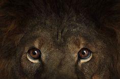 Portraits danimaux sauvages par Brad Wilson Photo