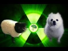 """The most famous doggo group is bacc. this time, with a special guest named """"broccoli pug"""". Preordner them tickets for their next concert on imagine-doggos. Anime Wolf, Special Guest, Pugs, Funny Animals, Funny Pictures, Funny Stuff, Youtube, Fanny Pics, Funny Things"""