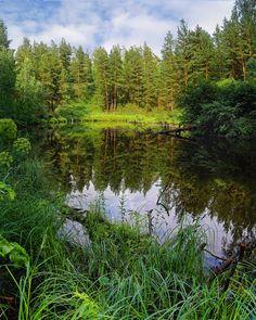 Beaver Lake, Karansky Pine Forest - Photograph by Veniamin Tropeznikov