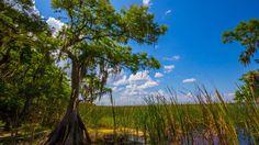 free wallpaper and screensavers for swamp