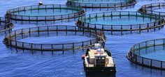 9 Things Everyone Should Know About Farmed Fish