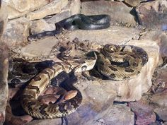 WV animals | Snakes at the West Virginia Wildlife Center | Flickr - Photo Sharing!