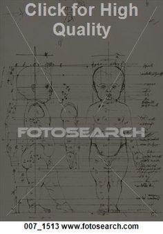 anatomia criança 8 anos - Pesquisa Google