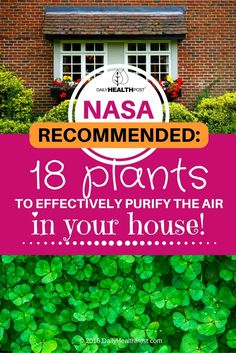 08 NASA-Recommended- 18 Plants To Effectively Purify The Air In Your House! (1)
