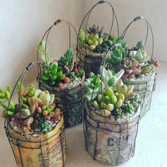 Amazing Succulents Garden Decor Ideas - Page 25 of 44 - LoveIn Home Types Of Succulents, Succulents In Containers, Cacti And Succulents, Planting Succulents, Container Herb Garden, Container Gardening Vegetables, Garden Planters, Succulent Gifts, Succulent Care
