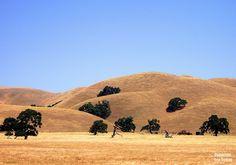Enjoying the Golden California Hills on the Drive to Dillon Beach
