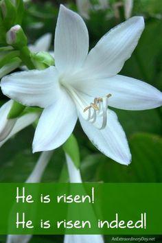 He is Risen!  He is