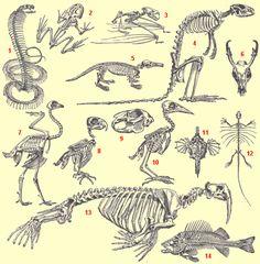 Exemples de squelettes.