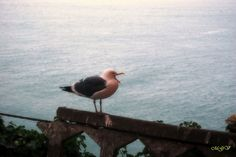 A Seagull in San Fransisco by mgverspecht, via Flickr