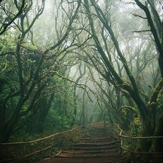 Mystical Bridge, La Gomera, The Canary Islands. Almost a little creepy and enchanted Beautiful World, Beautiful Places, Beautiful Forest, Simply Beautiful, Magic Places, Mystique, All Nature, Canary Islands, The Great Outdoors