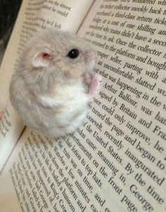 I love to read......