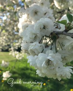 Pretty Flowers, White Flowers, Park Photography, Mornings, Photoshoot, Plants, Beautiful Flowers, Photo Shoot, Photography