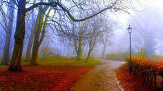 Foggy autumn park.