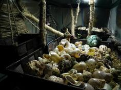Where can I buy sea shells for my hermit crabs? Photo credtit - Marnel Rodriguez