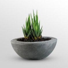 cool little planter