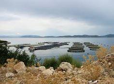 aquaculture - Google Search